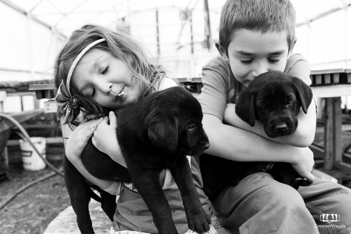 Gallatin Valley Botanical Labrador Puppy Family Portrait