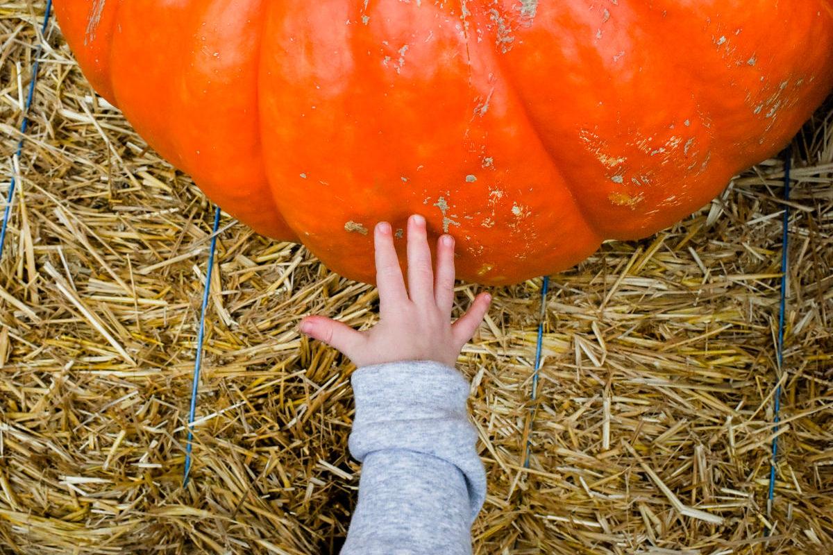 Bellingham Washington Family Portrait Session Pumpkin Hand