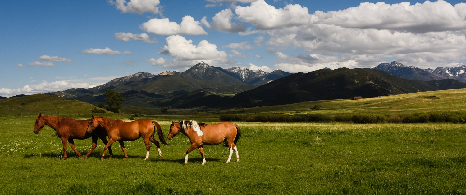 Bozeman_Lifestyle_Photographer_horses_Mountains_Paradise_Valley