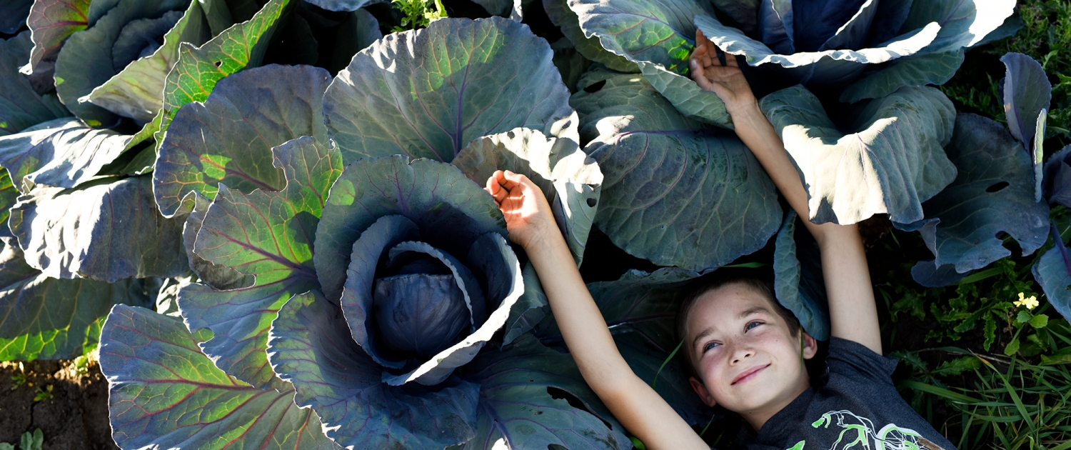 Bozeman Portrait Photography Gallatin Valley Botanical Farm cabbage kid