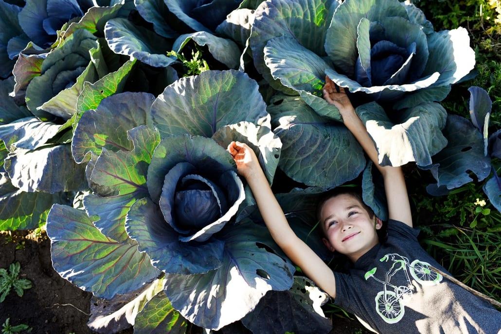 Bozeman Portrait Photography Gallatin Valley Botanical Farm cabbage kid