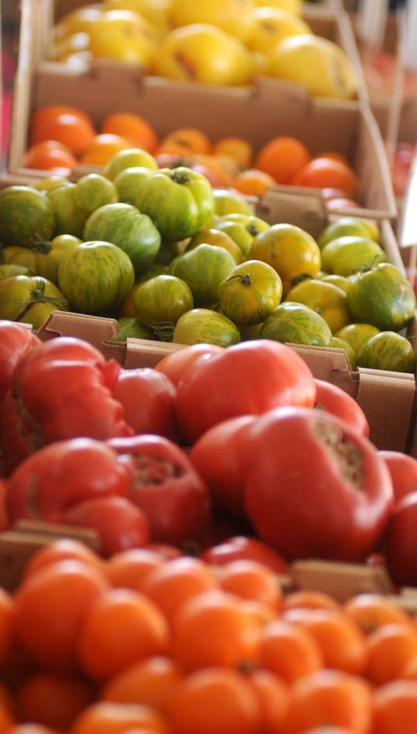 Bozeman Family Photography Gallatin Valley Botanical Farm Tomatoes