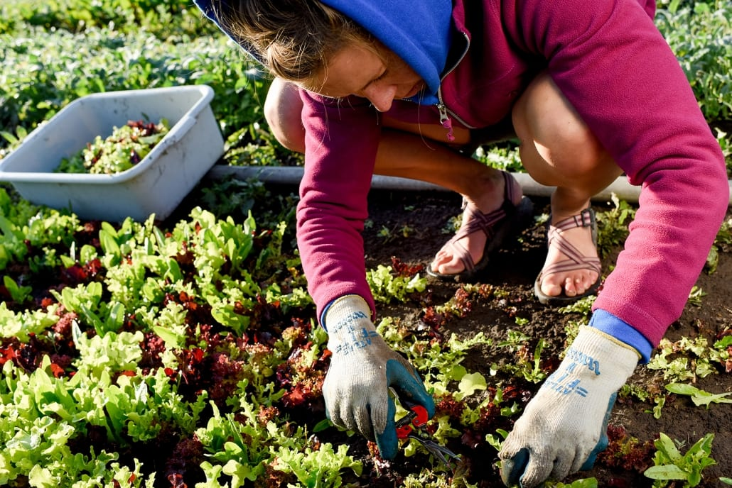 Bozeman Family Photography Gallatin Valley Botanical Farm Microgreen harvest