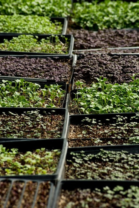Bozeman Portrait Photography Gallatin Valley Botanical Farm Seedlings