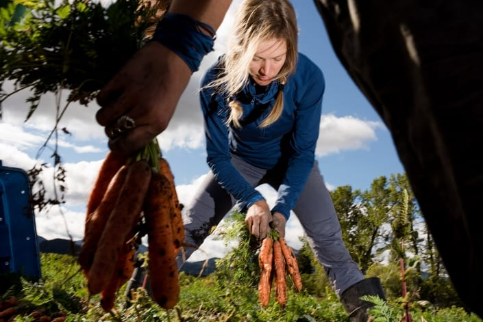 Bozeman Portrait Photography Gallatin Valley Botanical Farm carrot harvest