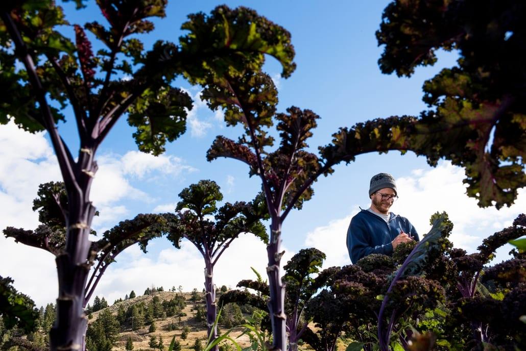 Bozeman Portrait Photography Gallatin Valley Botanical Farm Kale Harvest