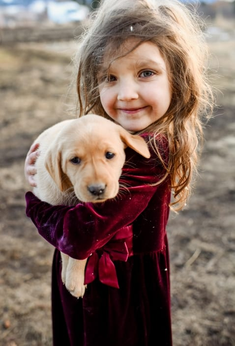 Bozeman Pet Photography labradors puppies with little girl