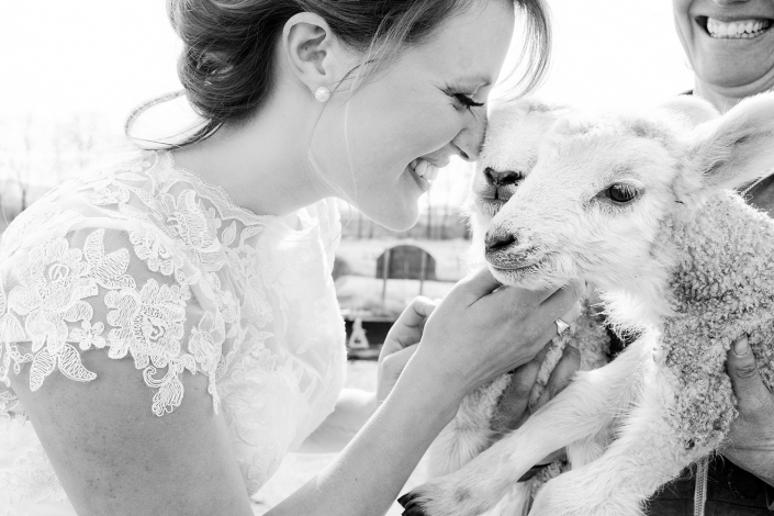 Bozeman Wedding Photographer smiling bride with lambs