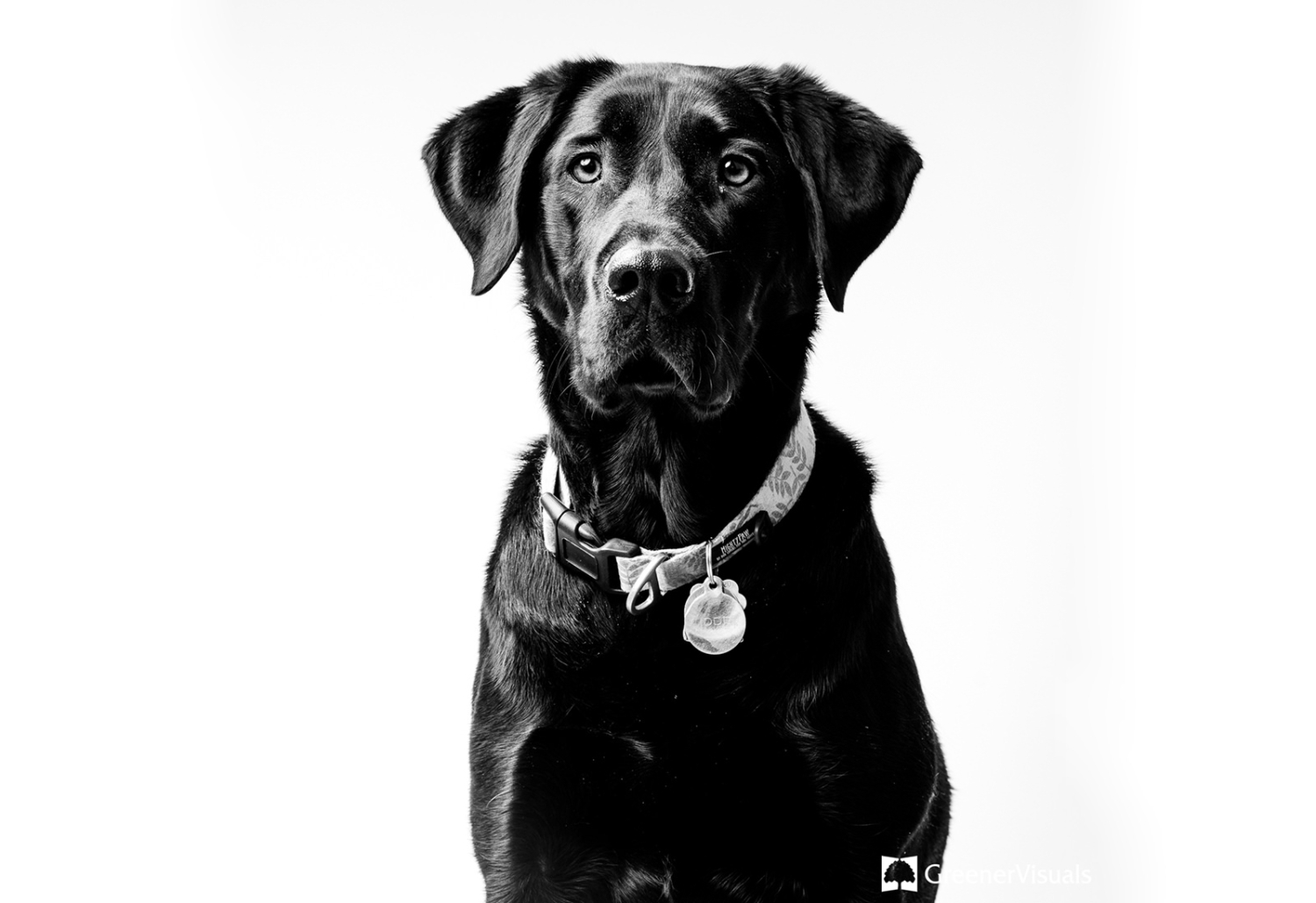 Greener-Visuals-Photography-Best-of-2020-Pet-Photography